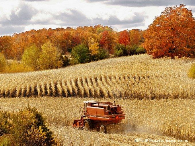 丰收 秋天大丰收的美