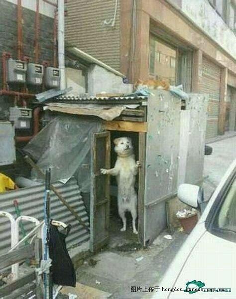 狗狗看见了收狗的广告信息