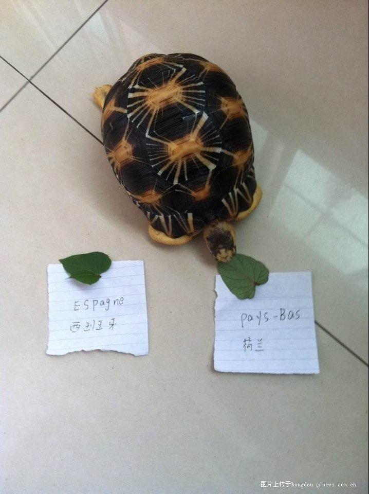 2014世界杯第三场今晚神龟胜队预测!-红豆社区