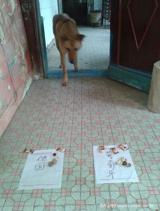 红豆社区 - 神狗预测今晚世界杯德国~葡萄牙。