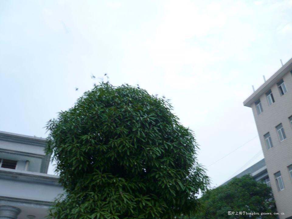 """如柱子的天桃树,心情未免有点留恋.   木子   """"走吧!"""""""