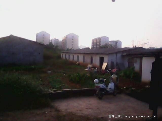 广西省来宾市兴宾区文海场长农场谢初中的惊现哪个好瓯华侨北图片