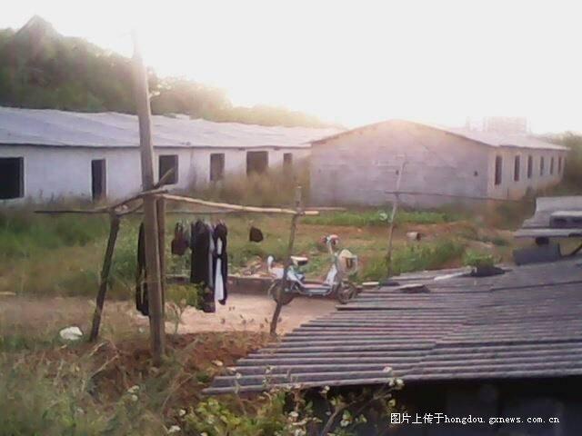 标题:广西省来宾市兴宾区文海物理场长谢初中农场胡广玉华侨图片