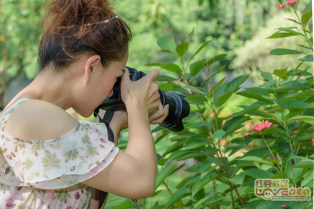 金花茶公园偶遇美女摄影师