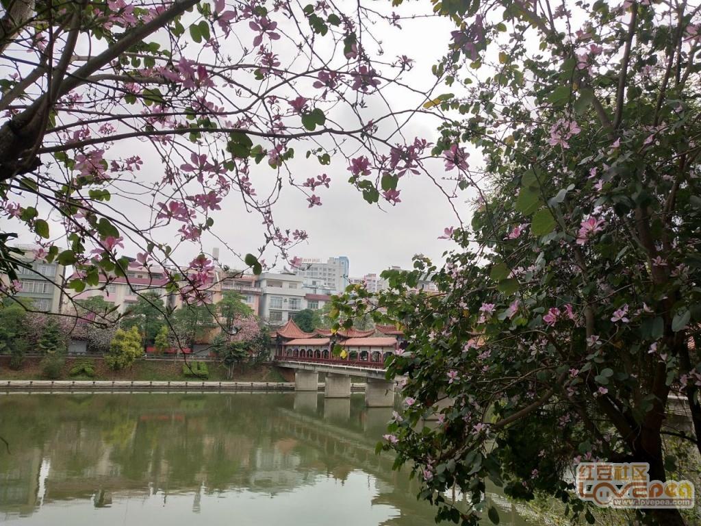 三月阳春所到处 荔乡满城尽芳菲