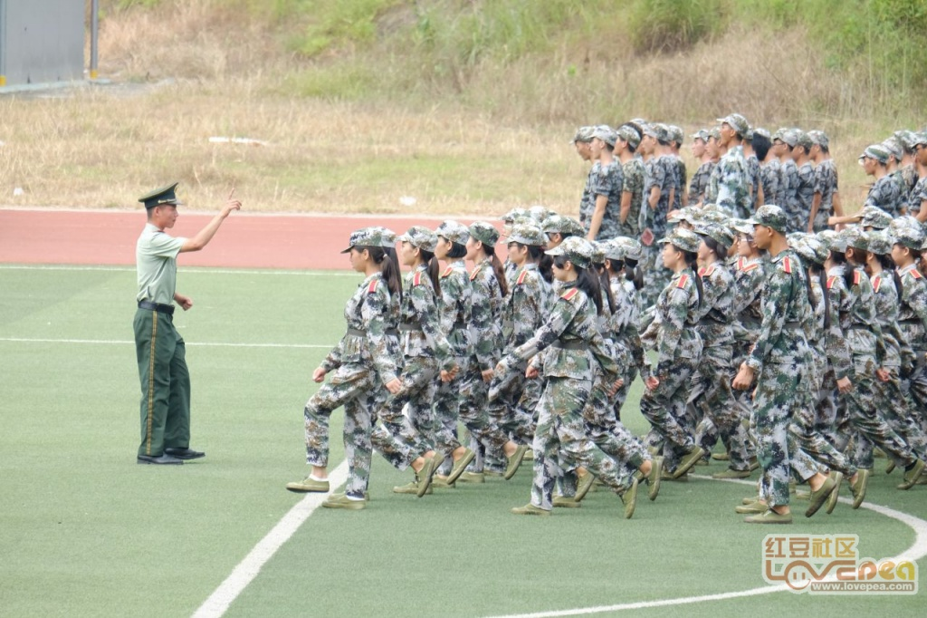 大学的军训心得体会范文三篇_品略