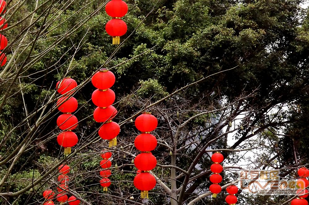 十五的灯笼十六红