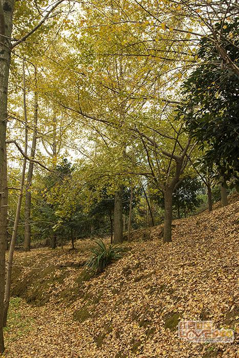 春来百花开秋去落叶黄