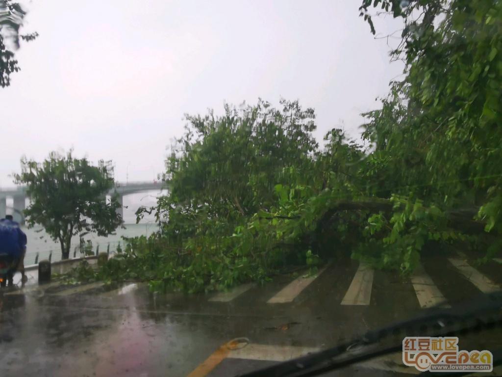 柳州暴雨!树木倒塌阻断沿江道路交通