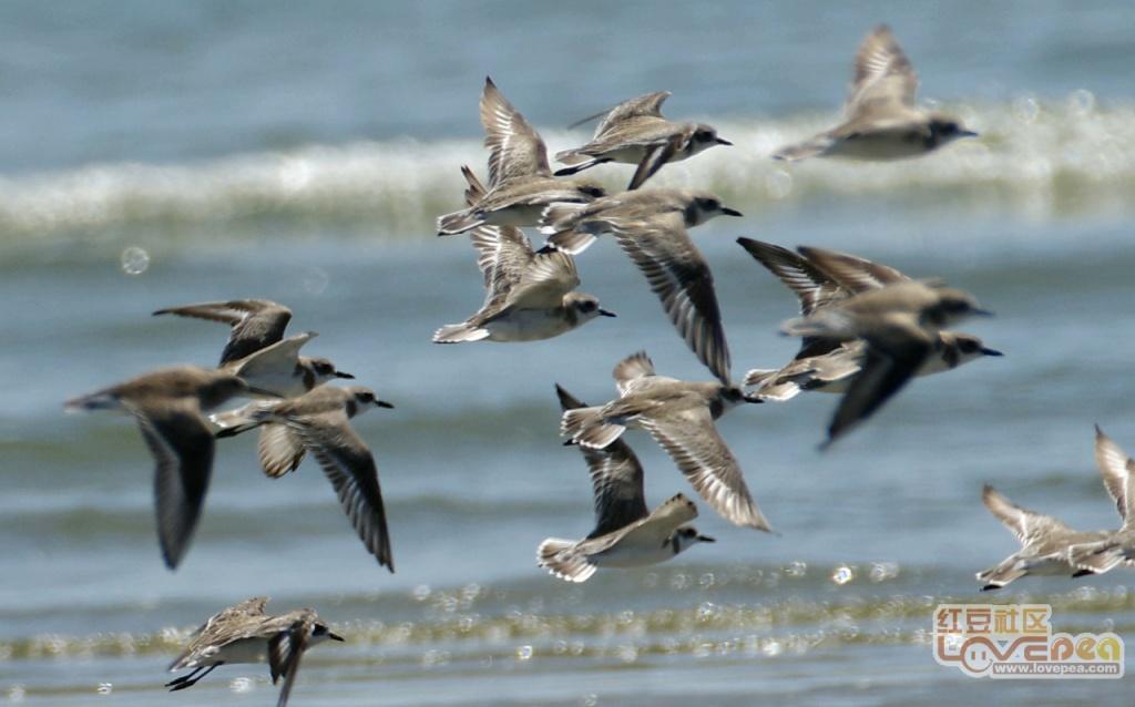 """生物多样性:防城港世界级的""""鸟"""""""