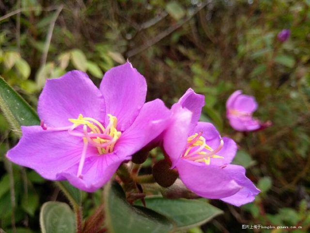 春天里花竞放,芳草地溢芬芳