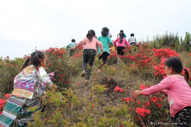 登陡峰坡赏杜鹃花
