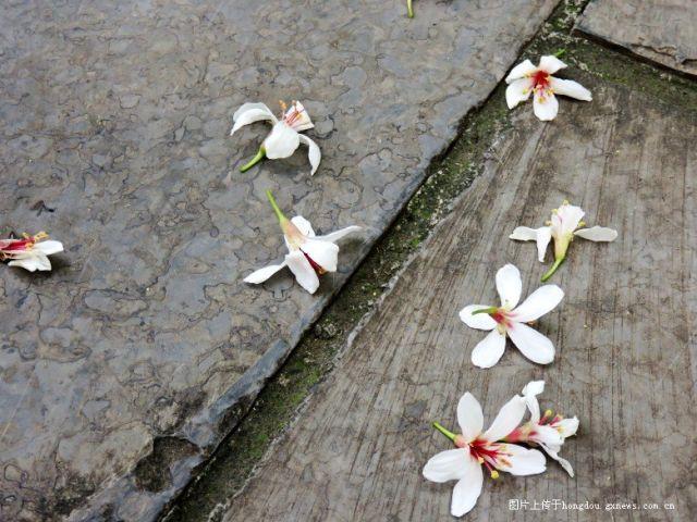 一树花朵满地落英