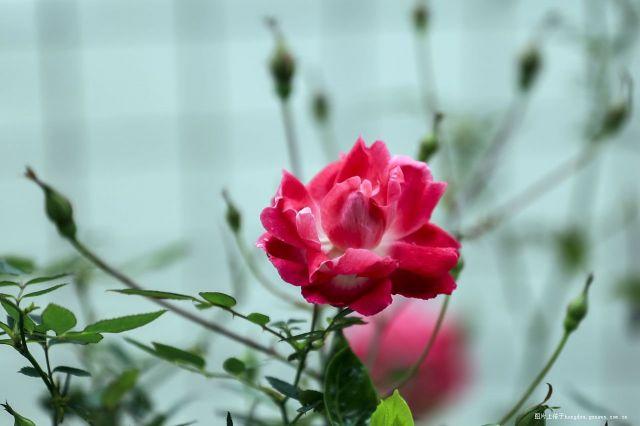 桃红柳绿又一春