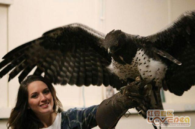 这只鸟哪有卖,我想养一只。