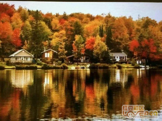 加拿大初秋枫树林