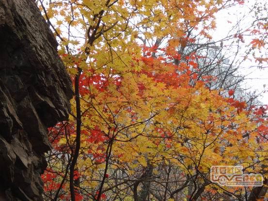 秋末.枫叶
