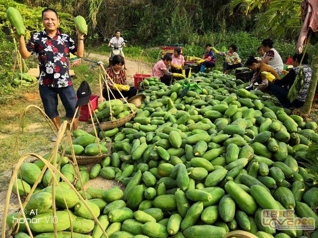 木瓜丰收农民乐