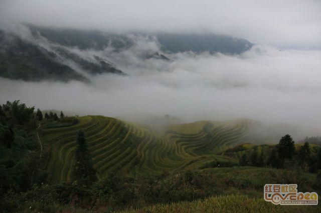 龙胜今秋云雾缭绕景色