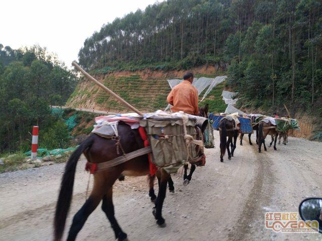 罗阳山上的马队