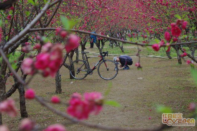 科大校园的桃花开了