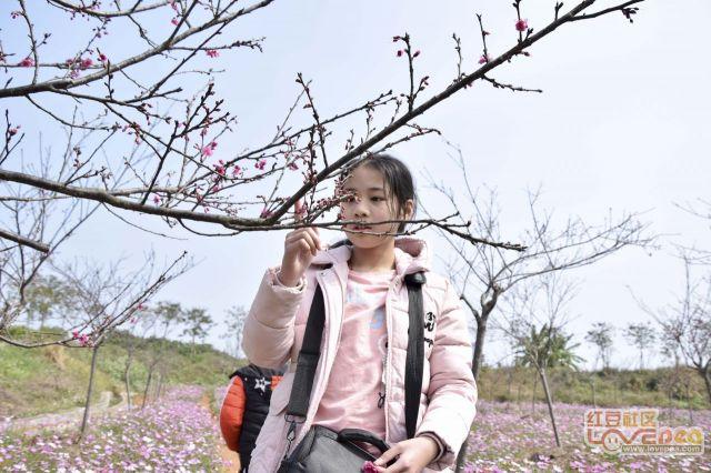 春暖花开看桃花