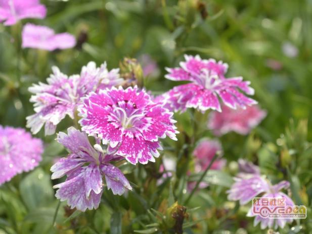 崇左园博园的花