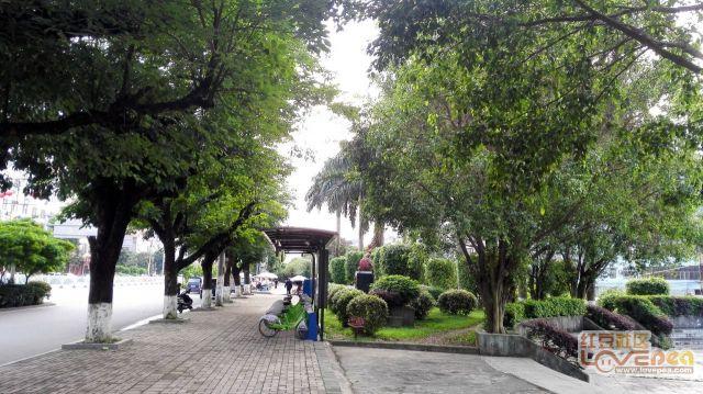 灵山江南路绿化不错