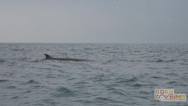 斜阳岛观鲸