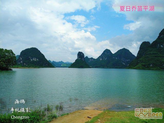 夏日乔苗平湖