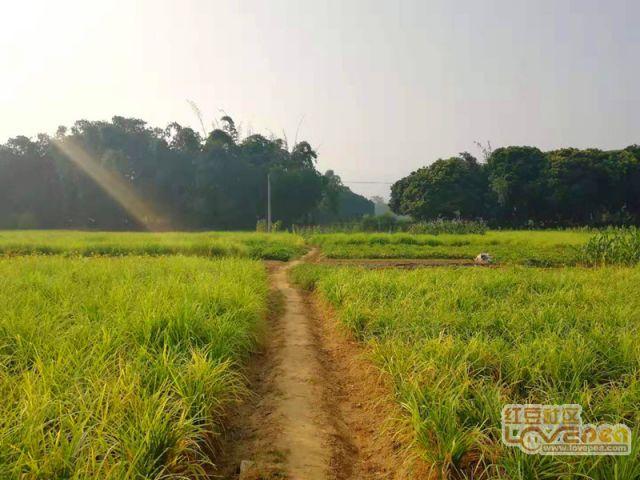 丁兰村田园风景