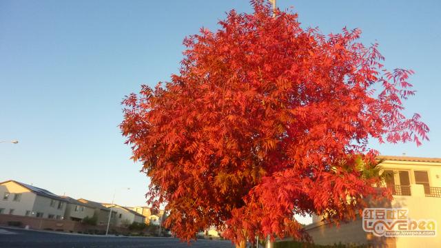 深秋红叶飘飞令人陶醉