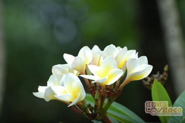 园博园花花