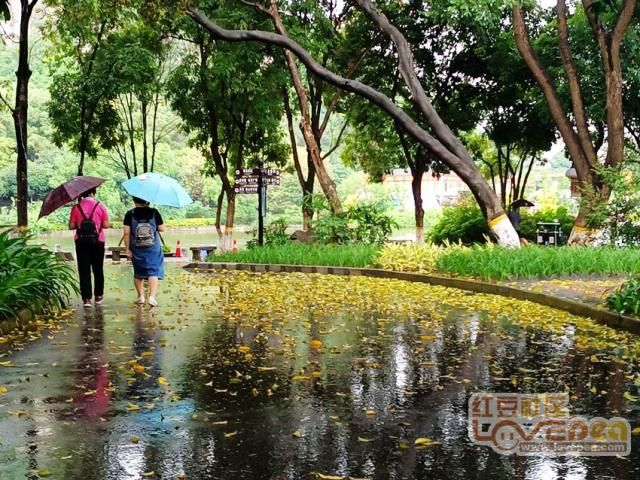 在大雨中散步