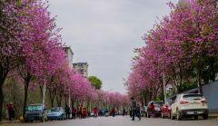 带你走进四月的龙城
