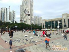 民族广场和平鸽