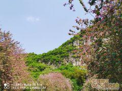 春雨后的紫荆龙城