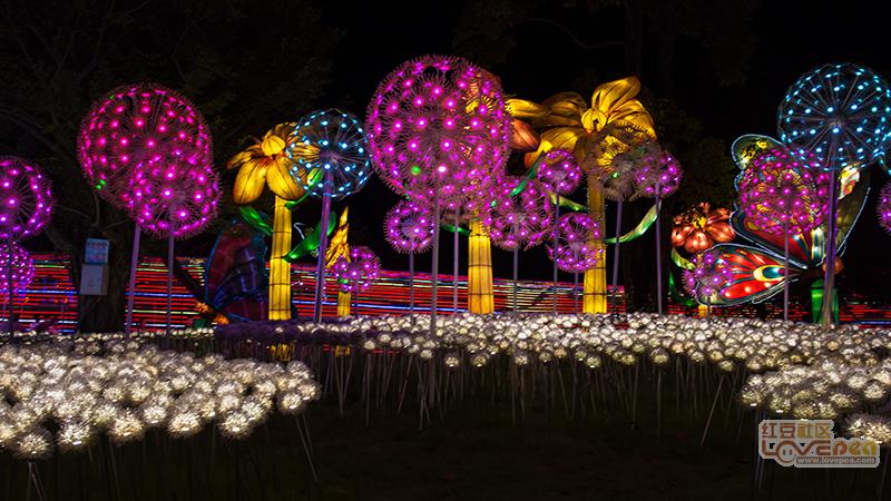 叶子花园美丽的花灯
